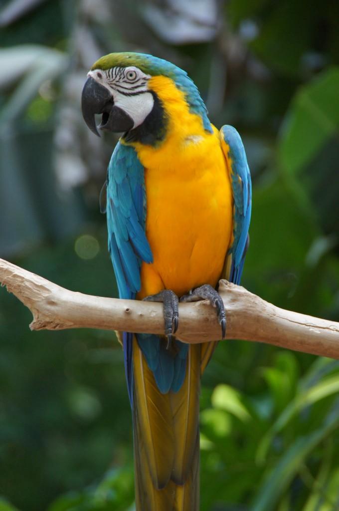 Парк птиц, Бразилия