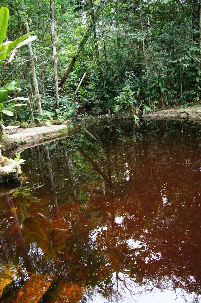 Натуральный бассейн с водой из Риу-Негру