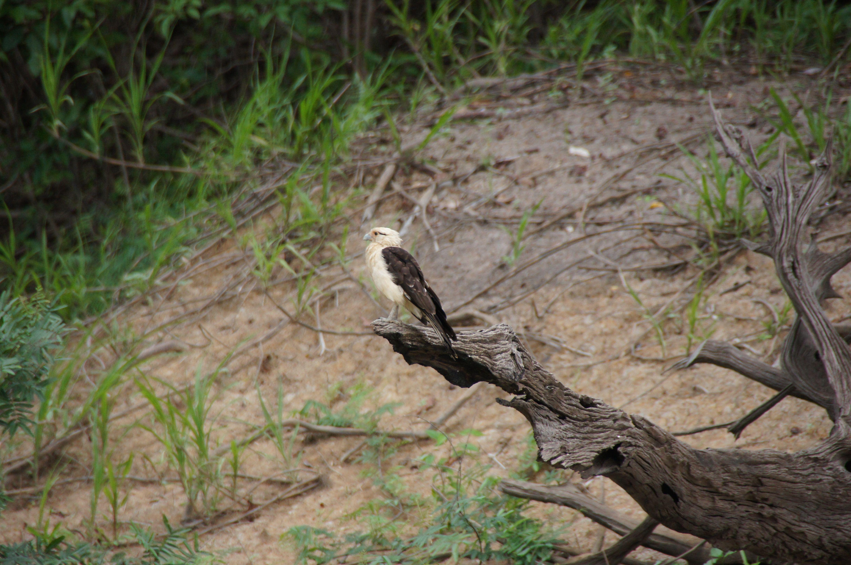 Природа Амазонки