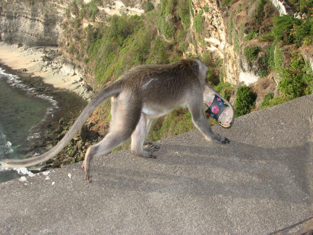 Утащила человеческий тапок, зачем он ей? Храм Улувату, остров Бали, 2007